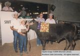 Steers, Champion, 1987