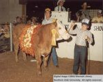 Steer, Reserve Champion, 1984