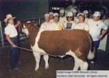 Steer, Reserve Champion, 1986