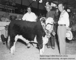 Steers, Grand Champion, 1954