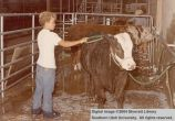 Cow, being washed