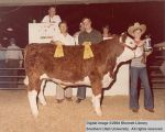 Steer, Reserve Champion, 1978