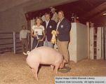 Hogs, Reserve Champion, 1978