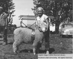 Sheep, Reserve Champion Rambouillet