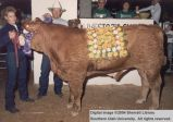 Steers, Champion, 1988