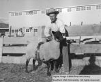 Sheep, Grand Champion Suffolk, 1954