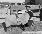 Rams, Grand Champion Suffolk, 1954