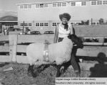 Sheep, Reserve Champion Suffolk, 1954