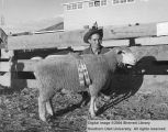 Sheep, Reserve Champion Columbia, 1954