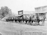 Twenty-mule team in front of McGee's place; Cedar City, Iron County, Utah